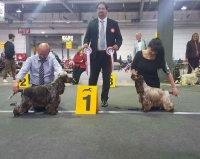 International  Dog Show Lussemburgo