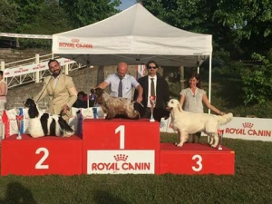 International Dog Show Caserta e Ercolano