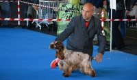 International Dog Show Bastia Umbra